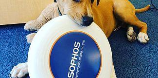 Sophos with dog