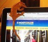 dedicated-servers-hostcolor